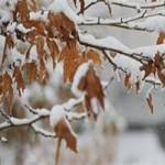 بارش اولین برف زمستانی در گلپایگان