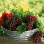 grapes1-Custom-244x172
