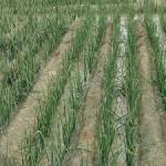 جهاد کشاورزی نطنز