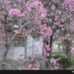 photo_2016-04-04_15-02-01
