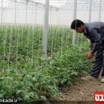 گلخانه-خمینی-شهر