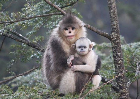 میمون غمگین!