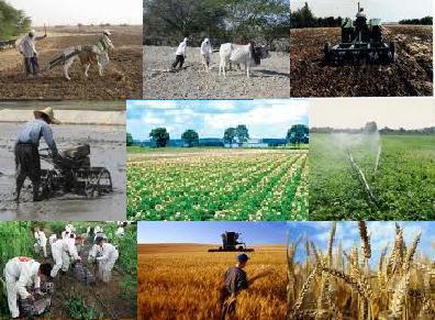 ایجاد ۶۰۰ فرصت شغلی در گلخانه های تیران و کرون/ 32 طرح جهاد کشاورزی در دهه  فجر افتتاح می شود – صاحب نیوز