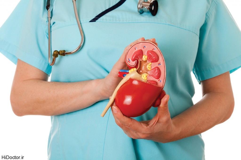 Kidney-1024x682
