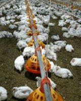 مقاومت آنتی بیوتیکی حیوانات