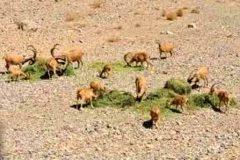 اصفهان-+نذر+علوفه+در+پارک+ملی+کلاه+قاضی