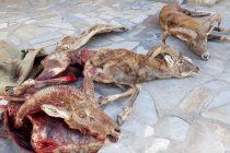 دستگیری شکارچیان غیر مجاز در اردستان
