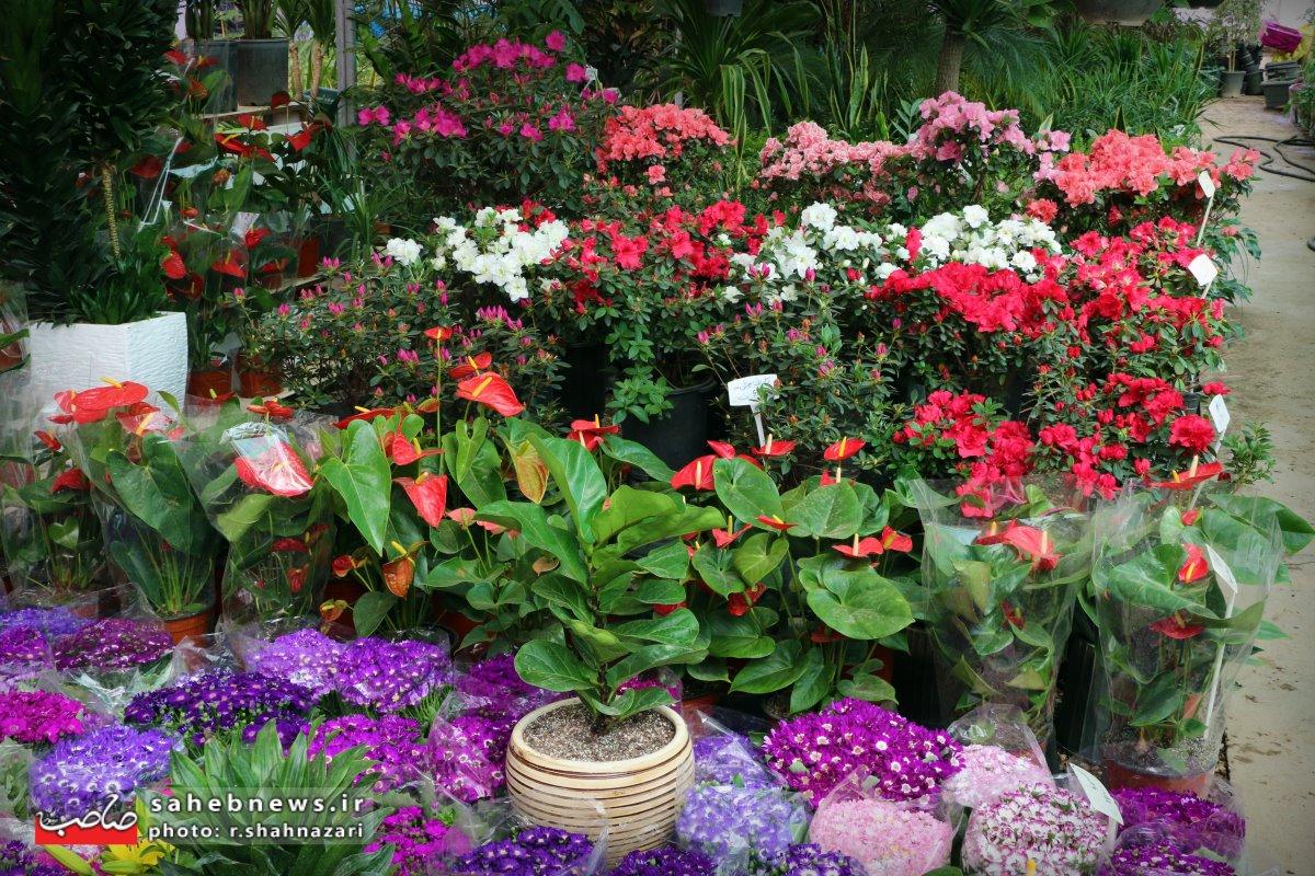 بازا گل و گیاه (1)