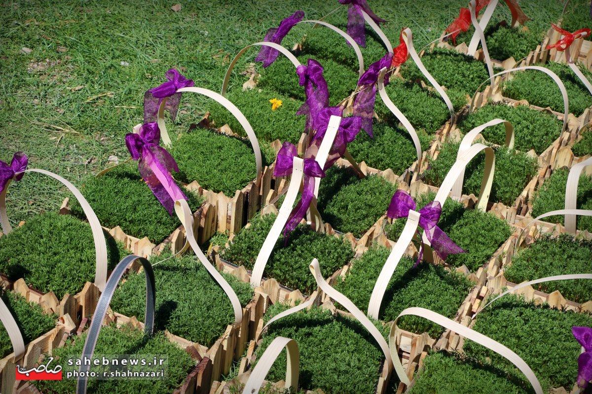بازا گل و گیاه (16)