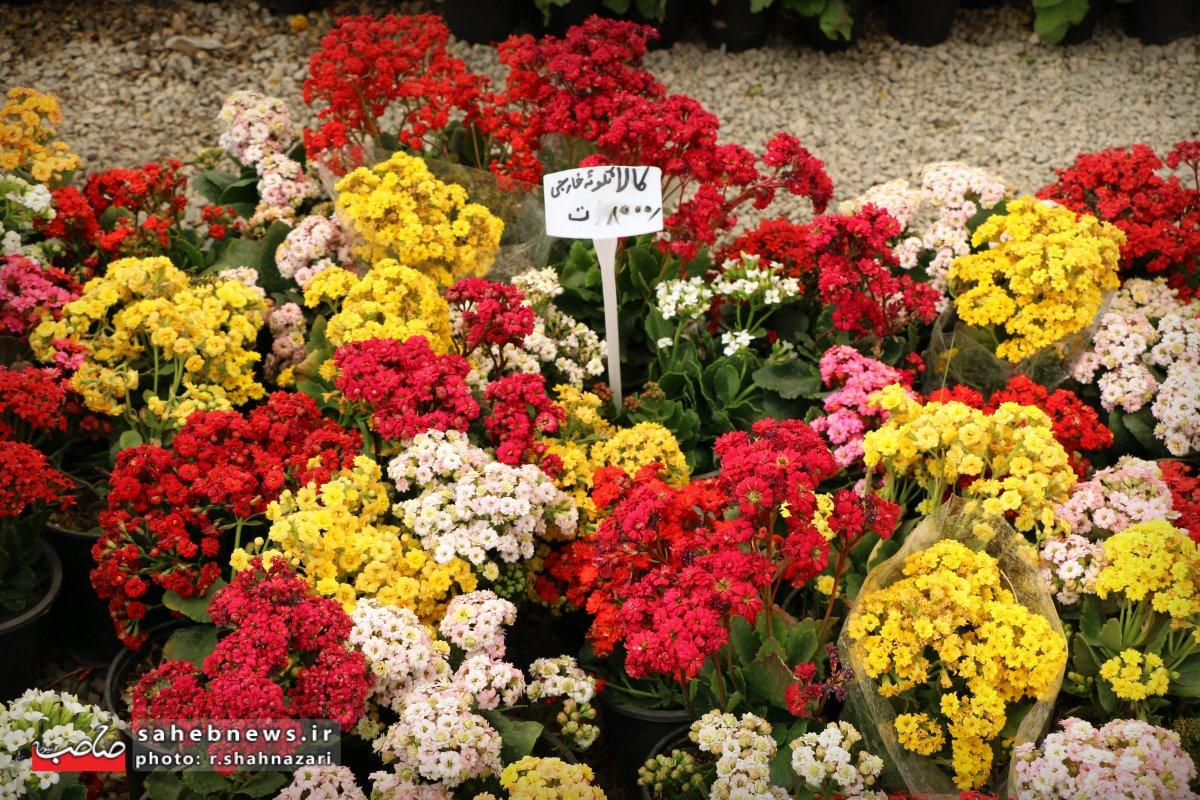 بازا گل و گیاه (24)