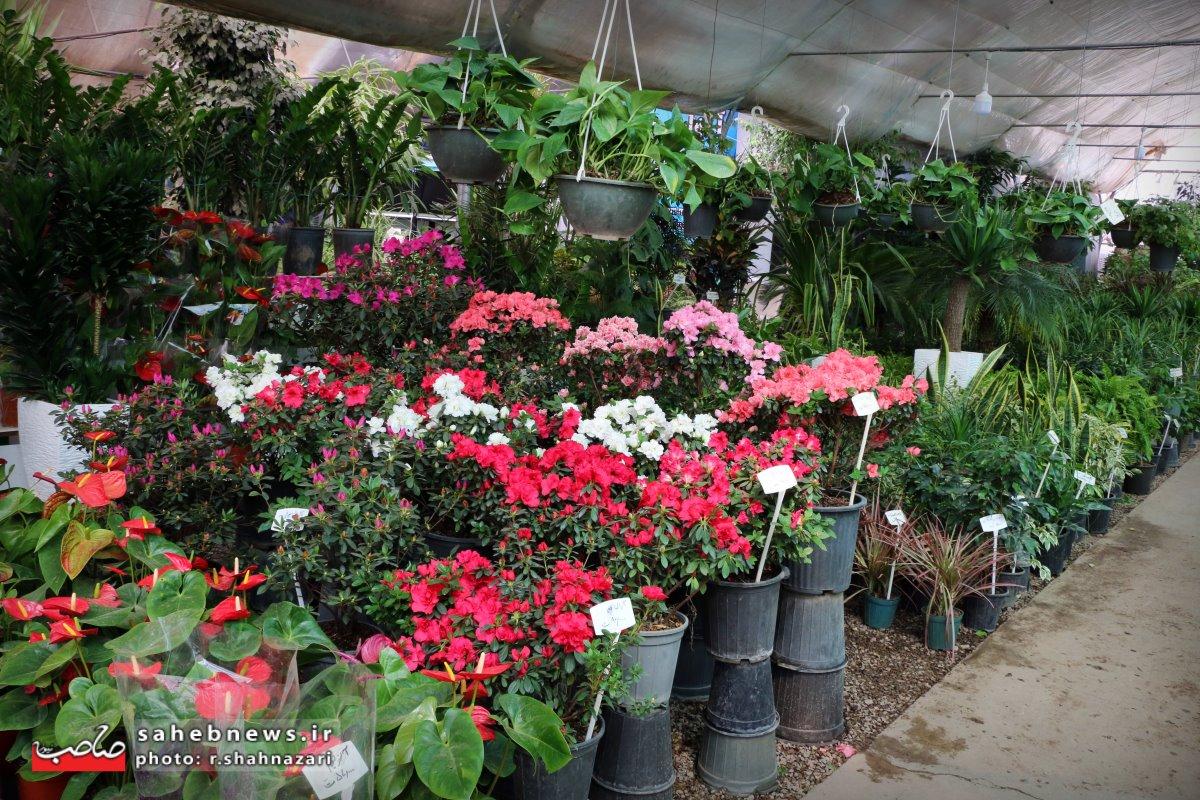 بازا گل و گیاه (7)