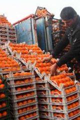 توزیع میوه شب عید اردستان