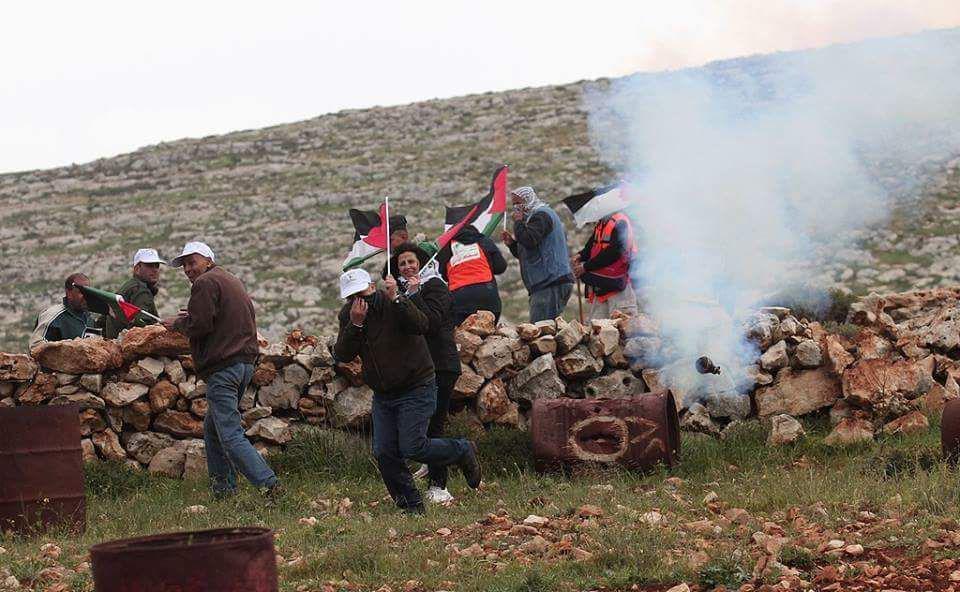 palestin (4)