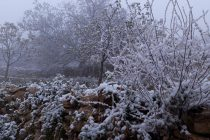 بارش برف. نطنز