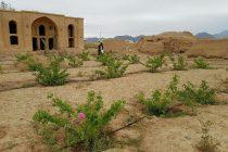 تاج آباد نطنز