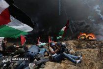 فلسطین (8)
