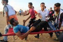 غزه (6)