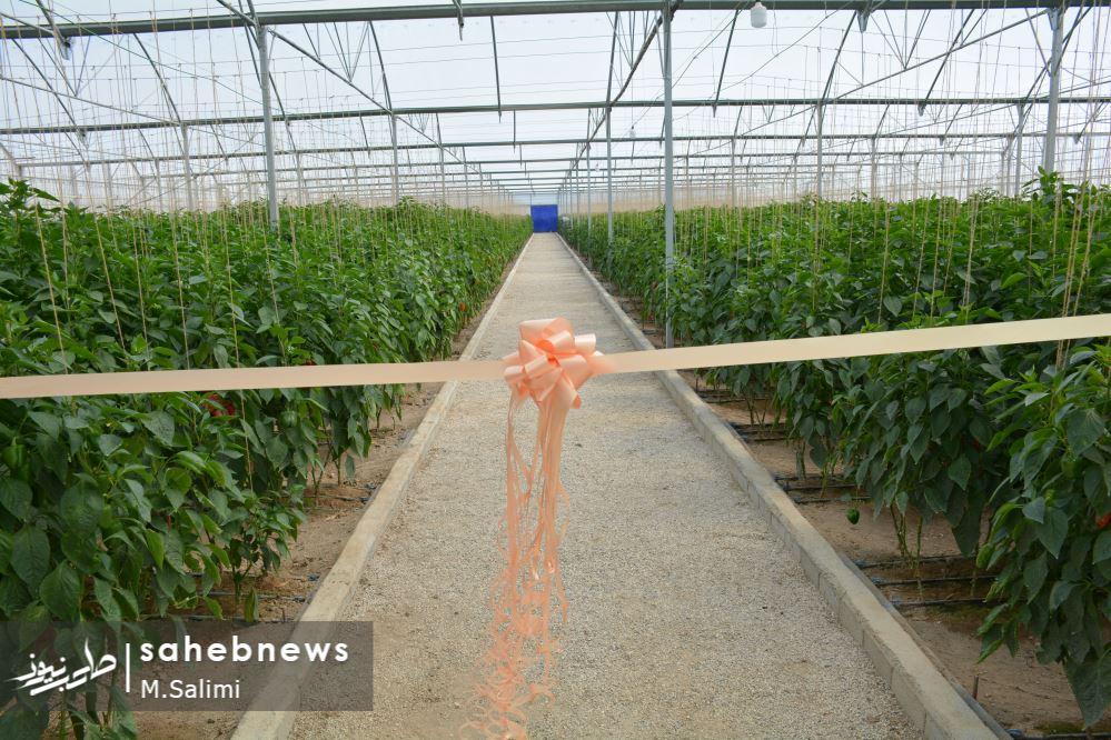 خمینی شهر - کشاورزی (3)