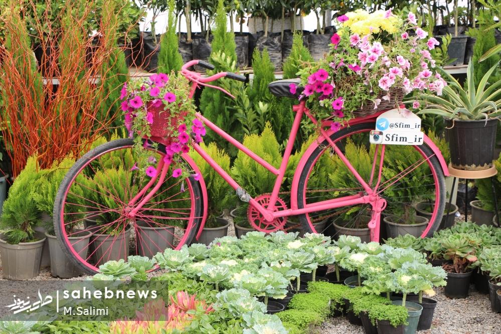 خمینی شهر - گل و گیاه (10)