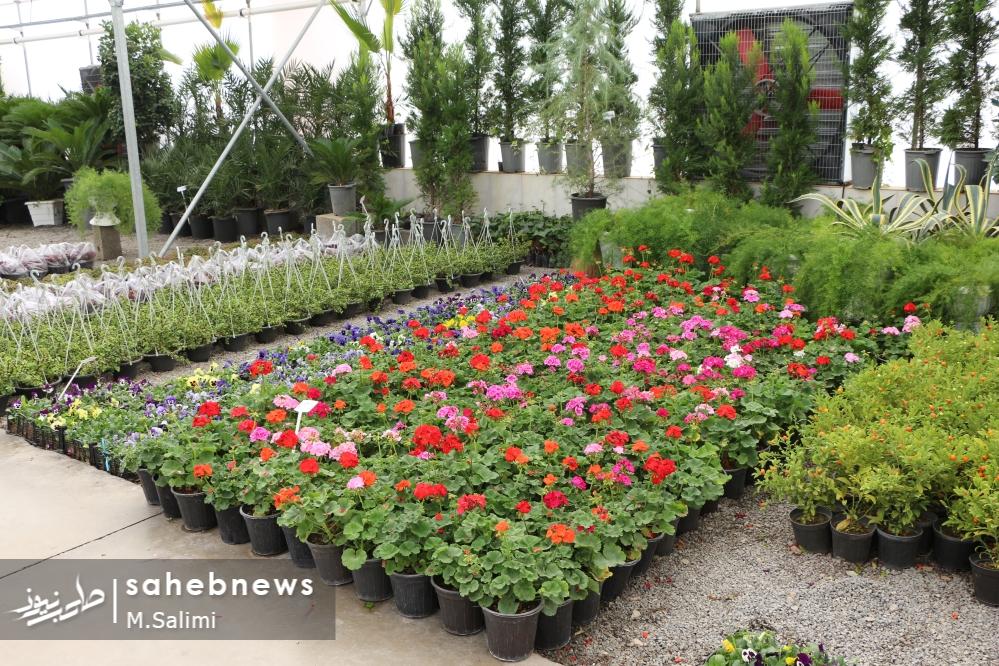 خمینی شهر - گل و گیاه (13)