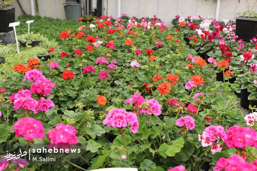 خمینی شهر - گل و گیاه (15)