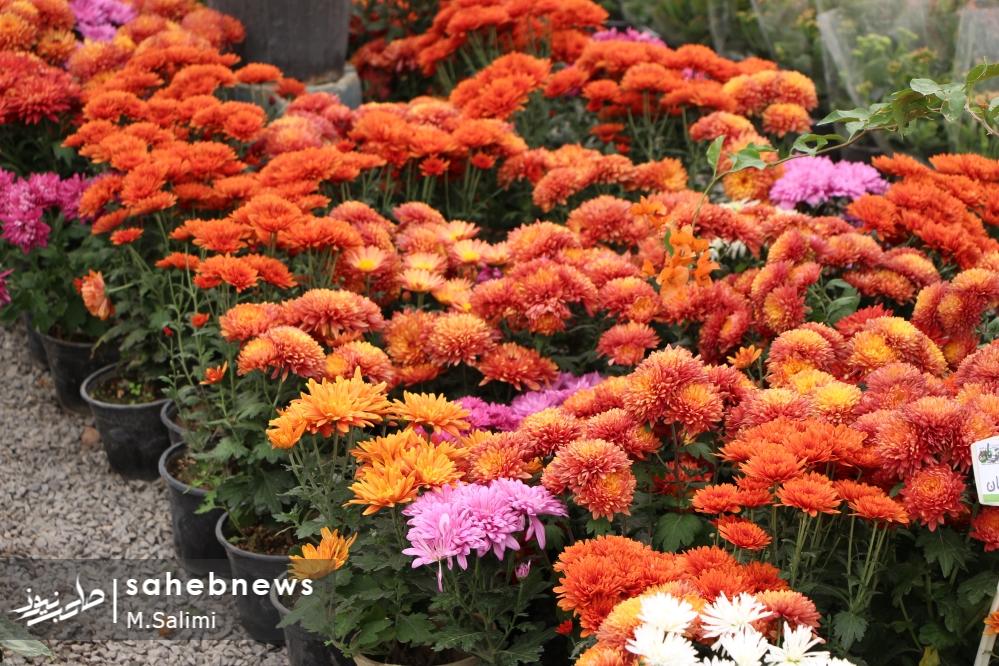 خمینی شهر - گل و گیاه (16)