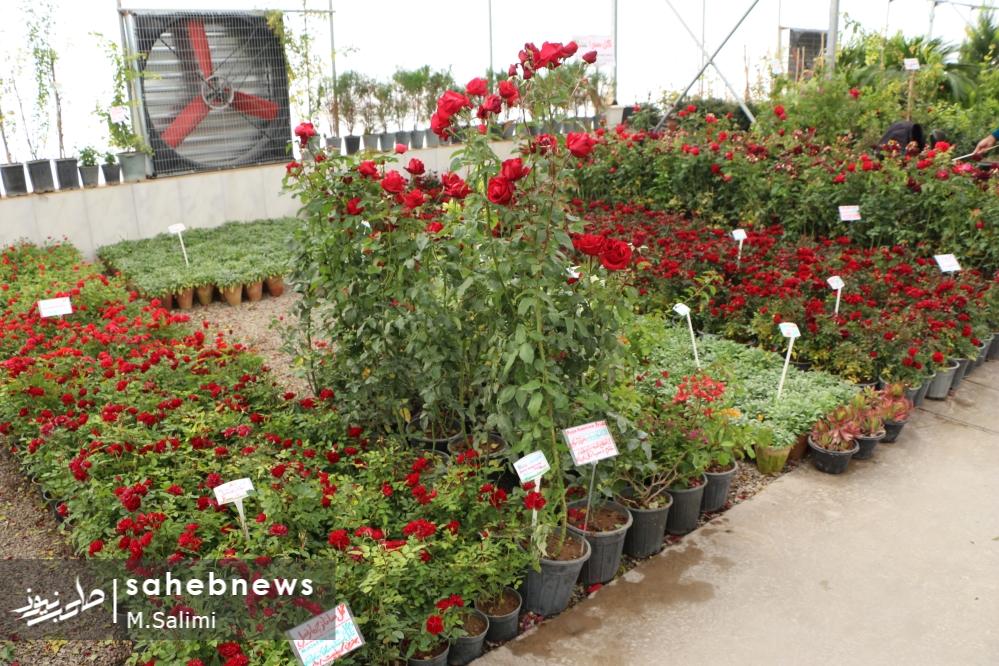 خمینی شهر - گل و گیاه (17)