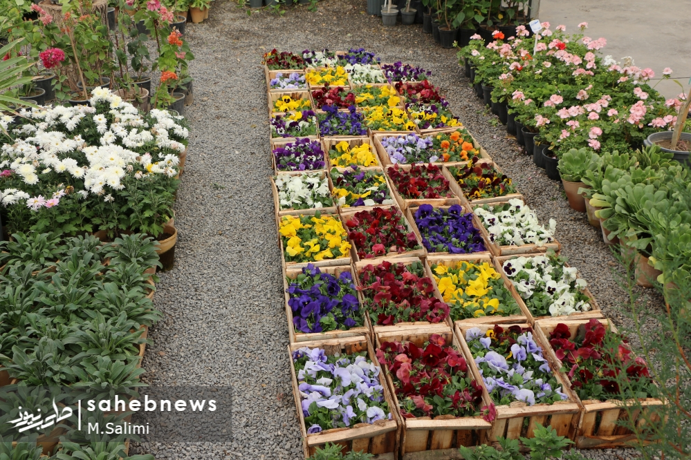 خمینی شهر - گل و گیاه (25)