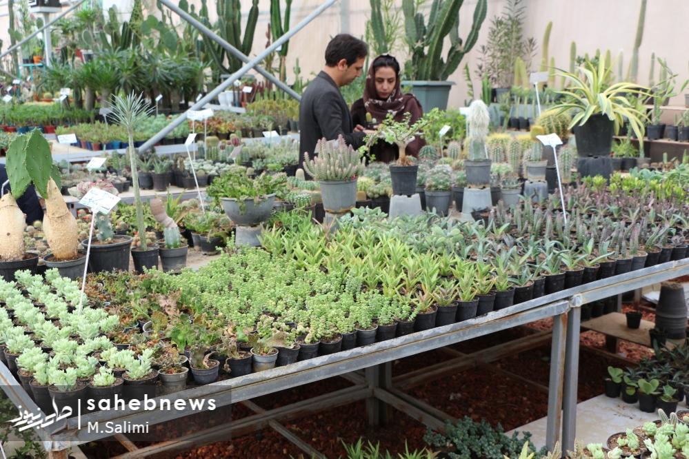 خمینی شهر - گل و گیاه (31)