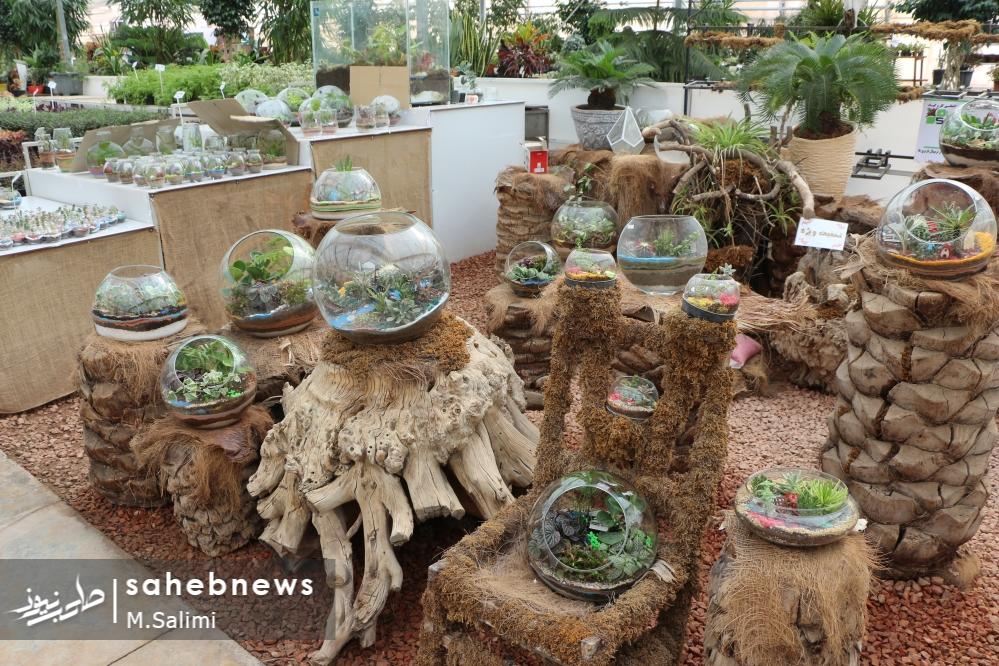 خمینی شهر - گل و گیاه (32)