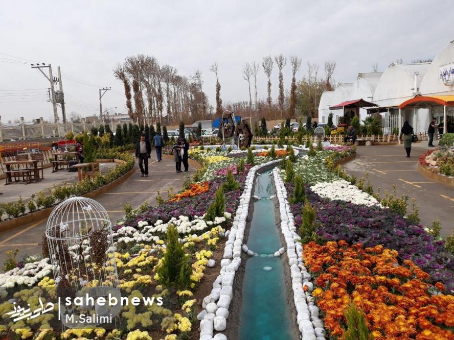 خمینی شهر - گل و گیاه (4)