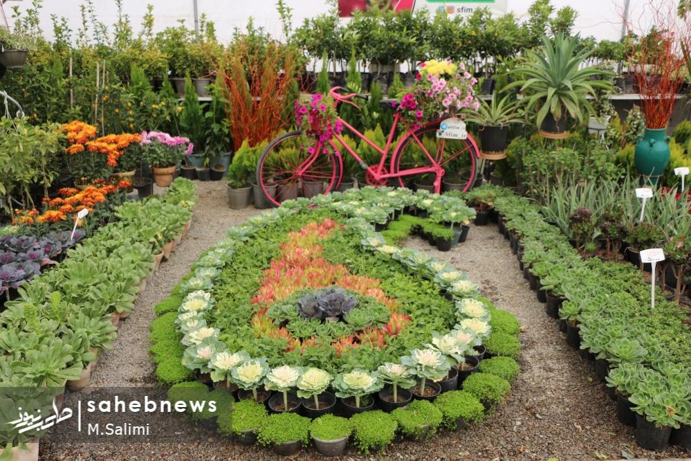 خمینی شهر - گل و گیاه (9)