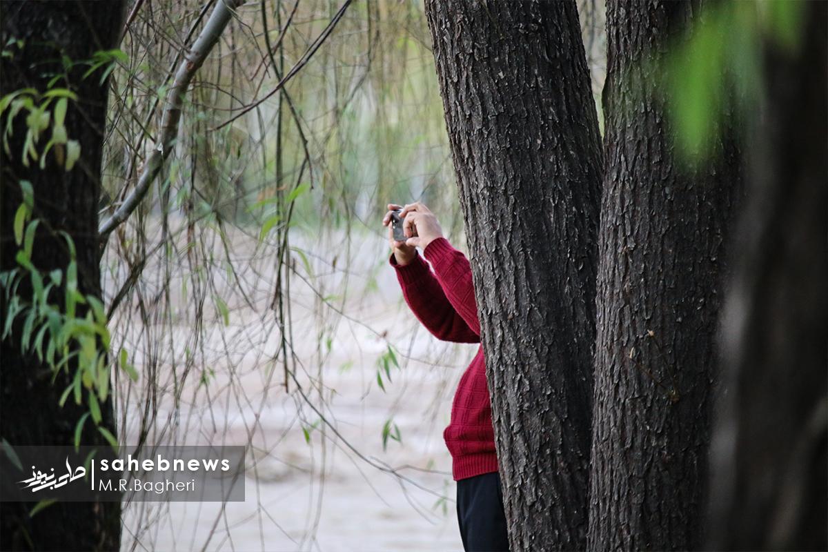 پاییز ناژوان (16)
