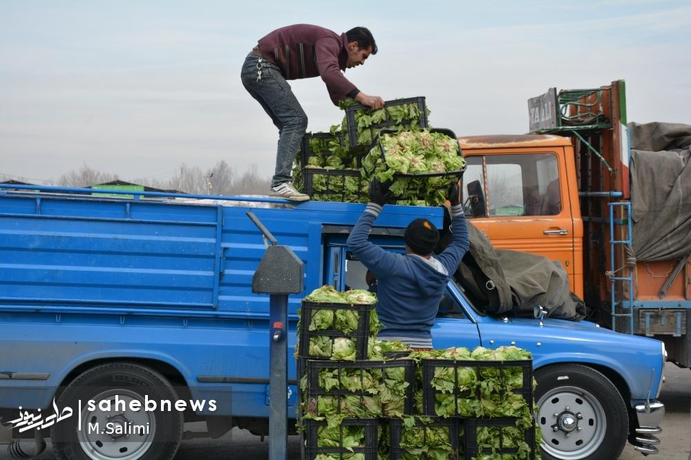 خمینی شهر - بازار میوه و تره بار (5)