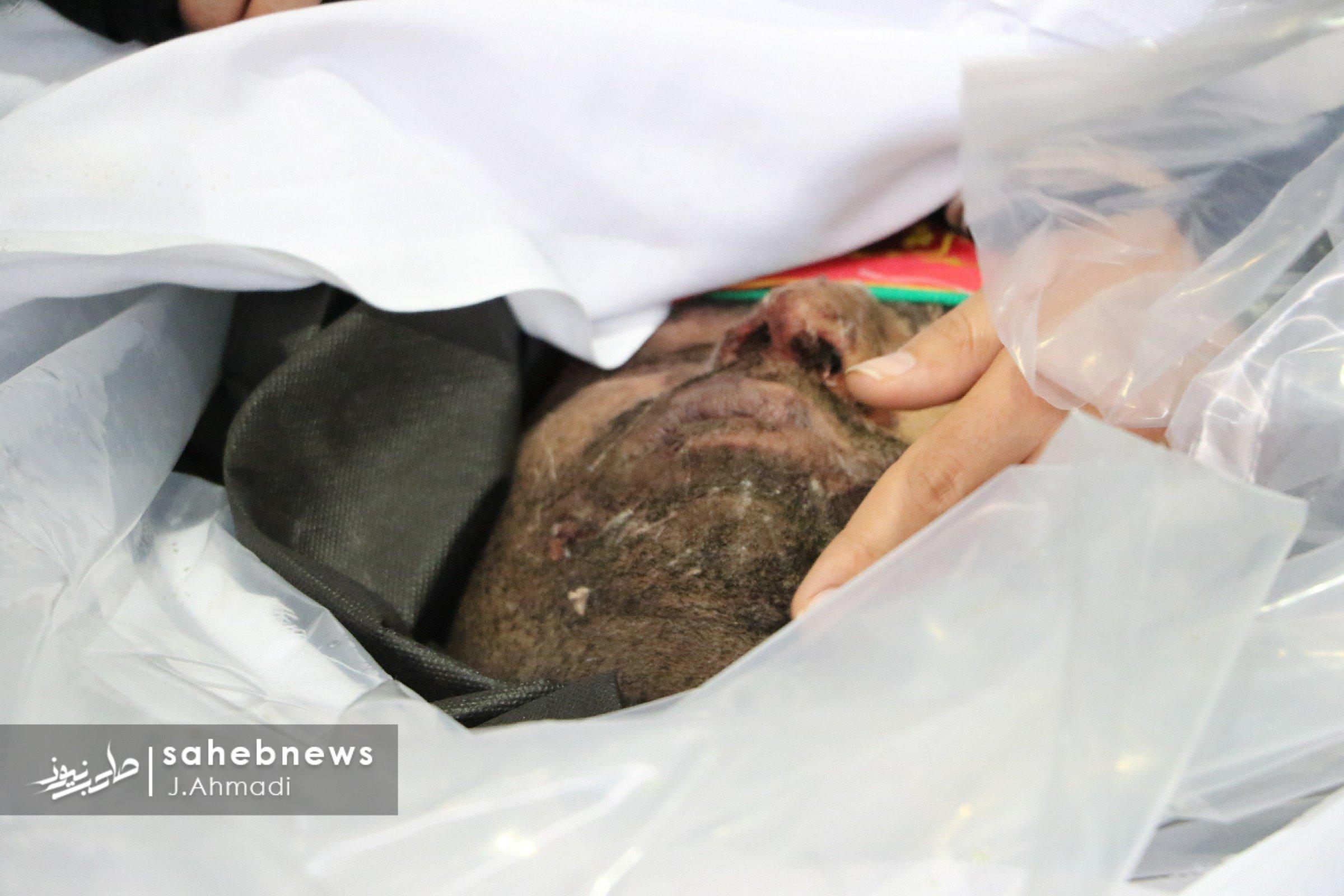 27 شهید حادثه تروریستی اصفهان (9)