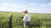 کشاورزی-اینترنت-اشیا-هوشمند