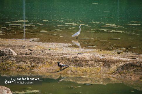 زاینده رود (10)