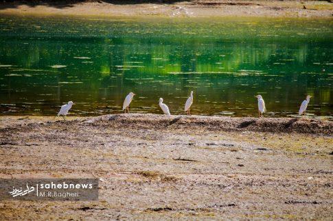 زاینده رود (11)