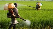 poison-farming