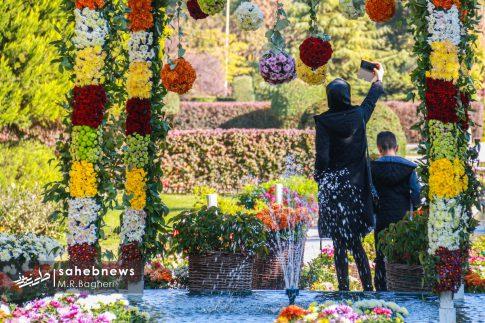 نمایشگاه گل های داوودی اصفهان (1)
