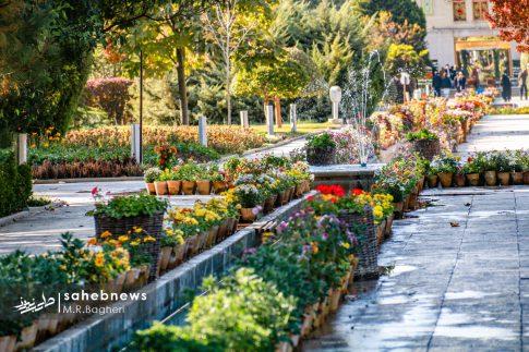 نمایشگاه گل های داوودی اصفهان (11)