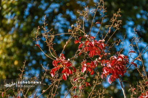 نمایشگاه گل های داوودی اصفهان (15)