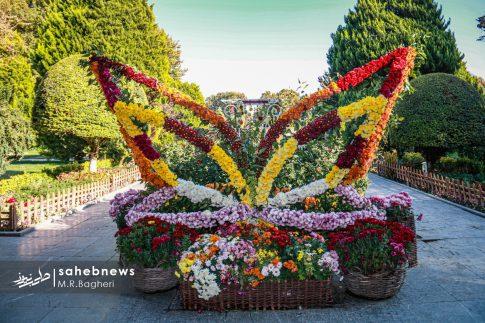 نمایشگاه گل های داوودی اصفهان (18)