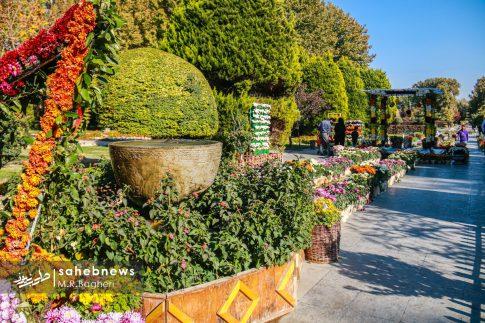 نمایشگاه گل های داوودی اصفهان (2)