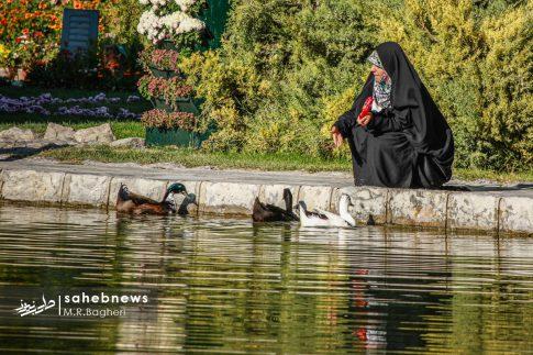 نمایشگاه گل های داوودی اصفهان (23)