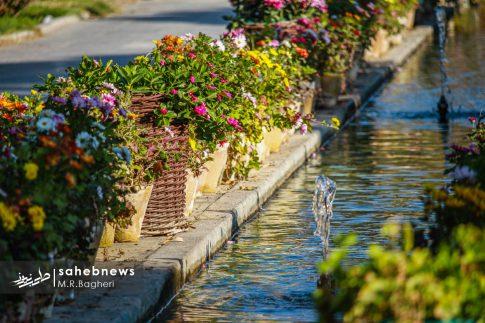 نمایشگاه گل های داوودی اصفهان (25)