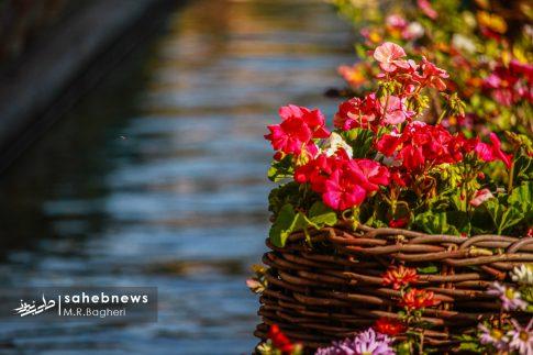 نمایشگاه گل های داوودی اصفهان (26)
