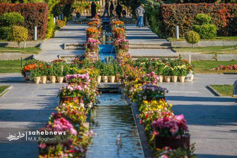 نمایشگاه گل های داوودی اصفهان (27)