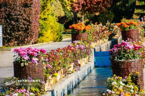 نمایشگاه گل های داوودی اصفهان (4)