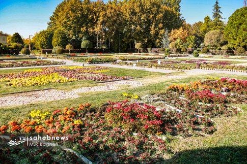 نمایشگاه گل های داوودی اصفهان (6)